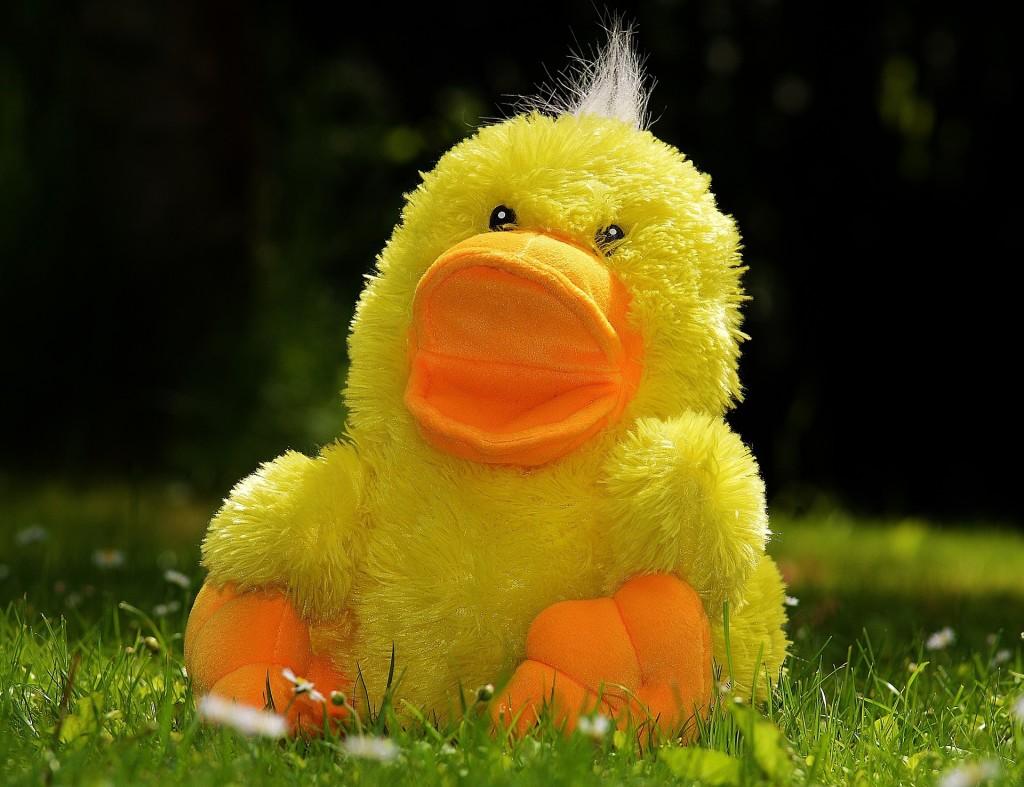 duck-783684_1920